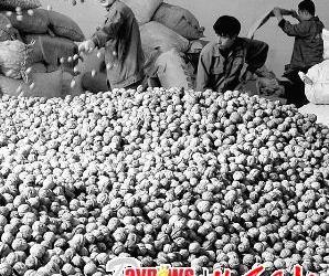 汾阳市核桃产量居全国县级首位