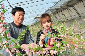 天津市北辰区积极推广温室大棚水果栽培技术