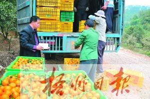 水果经纪人活跃市场流通