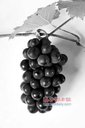 水果集中上市 自酿酒香飘佛山