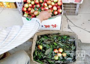 """一箱樱桃塞10公斤菜叶 水果商的""""坑爹""""潜规则"""