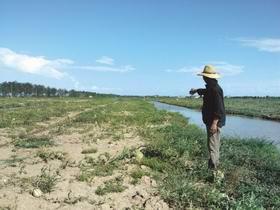 温州:莘塍瓜农遭遇20年未见严重减产
