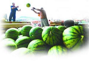 济南瓜农:一亩地西瓜多赚700元