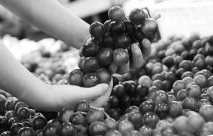 沪郊优质水果可能低价进超市