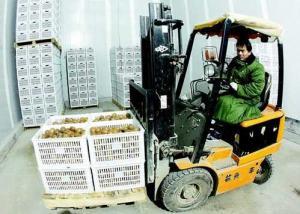 眉县猕猴桃批发市场科技研发中心 明年6月底投入使用