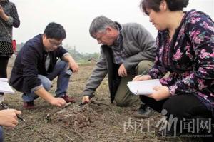 威远县无花果种植规模已达5.3万亩