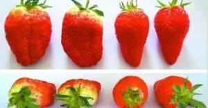 烟台人如何辨别打了激素的草莓?