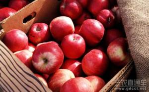 苹果价格一路走低 专家:勿惜售以免错过良机