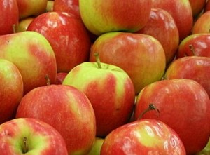 Toby-Hudson-Pink-Lady-apples-panorama
