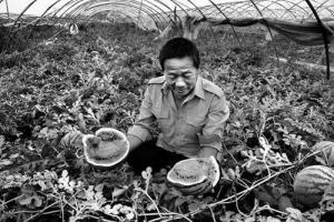 大荔滞销西瓜销售近尾声 多数农户仅收回成本