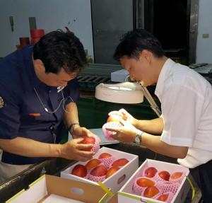 防检局协同日本检疫官办理输日芒果检疫作业