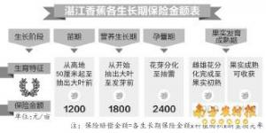 湛江政策性香蕉保险通过审批