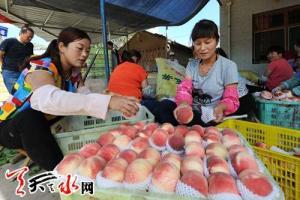 天水秦安蜜桃荣获国家级绿色食品认证