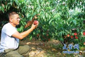 文登:果农只盯树上钱 孰知桃园皆风景