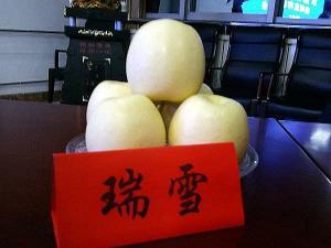"""走进""""瑞阳""""和""""瑞雪"""",西北农林科大苹果新品种进入市场"""